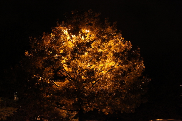 Fiery tree at Lied