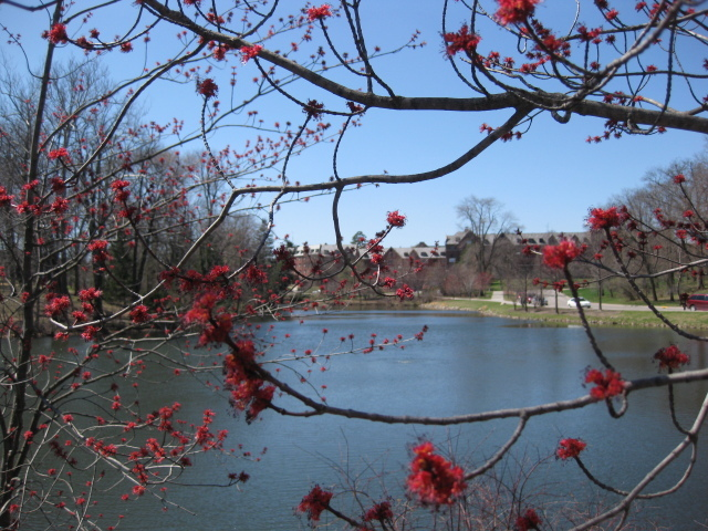 Lake Laverne in Spring