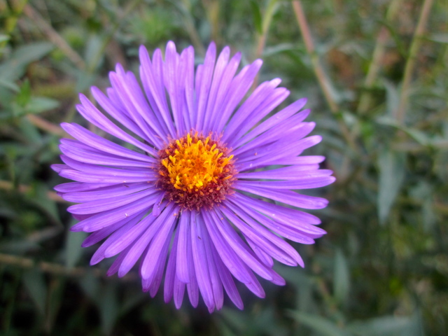 Flower at Reiman Gardens - Photostream - Iowa State University