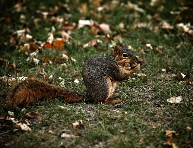 A Starving Squirrel