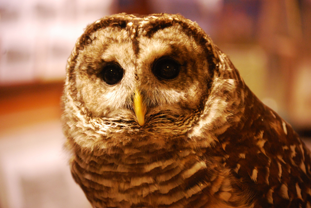 Wildlife Care Center - Owl