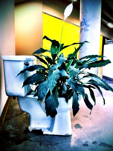 Plant on a toilet