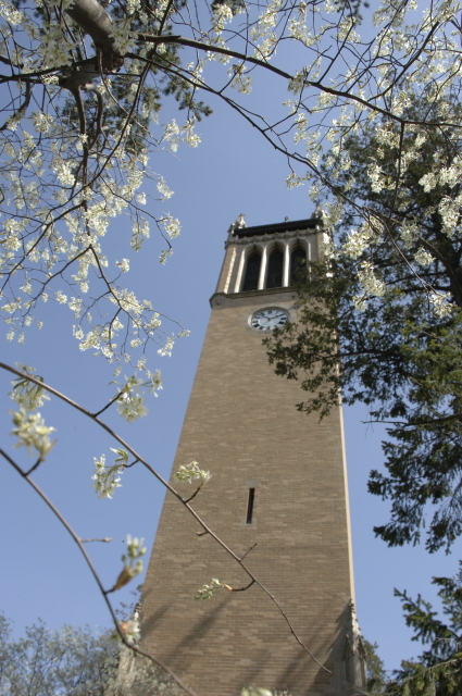 Campanile Framed in Blossoms