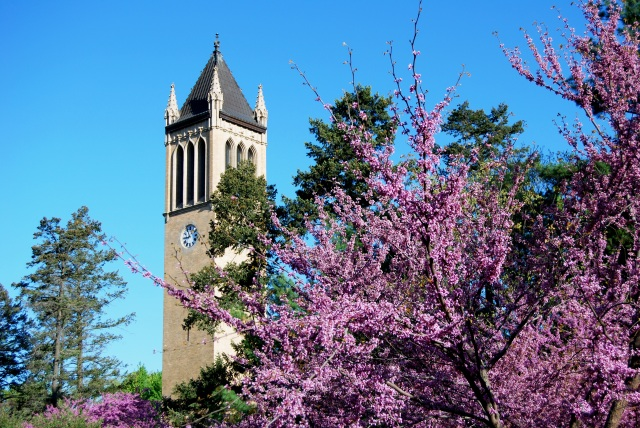 Campanile in Purple