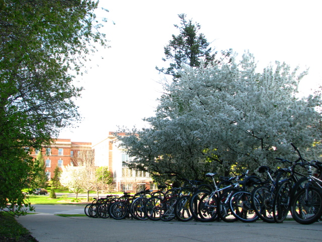 Bicycles outside of Friley Hall