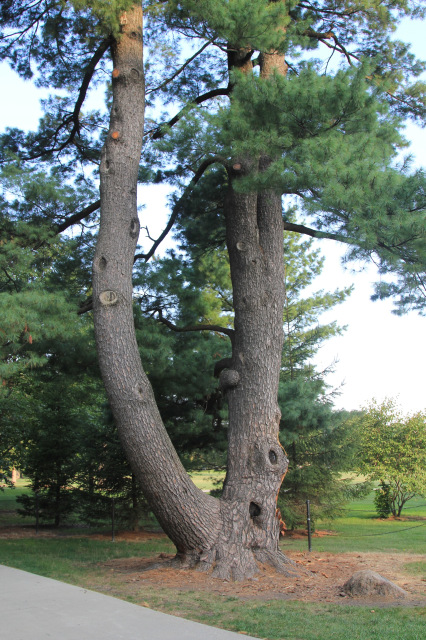 Unique Tree