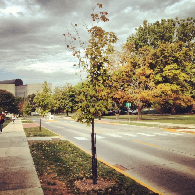 One cloudy morning in ISU