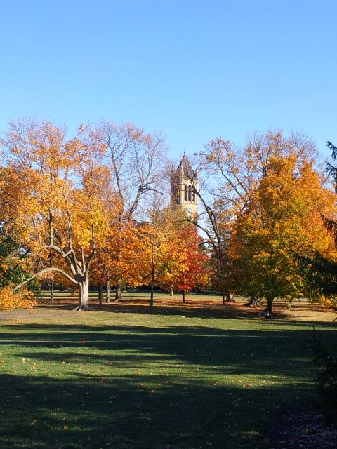 Campanile in the Fall