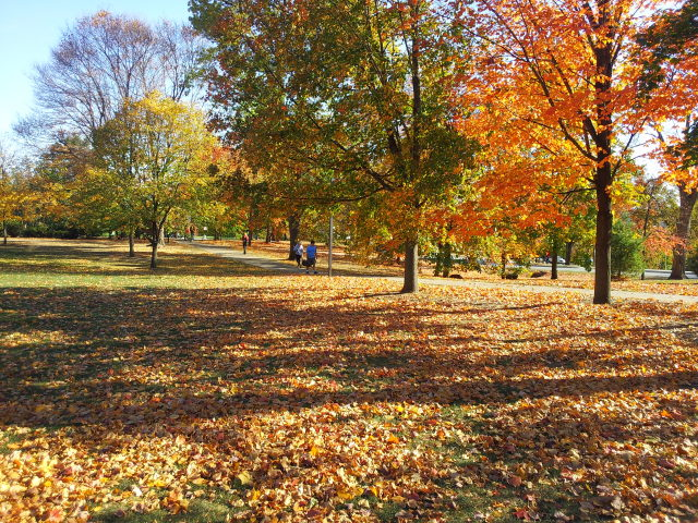 Fall on Central Campus