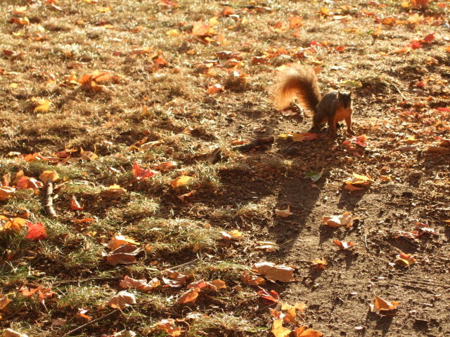 Squirrel in Sunlight