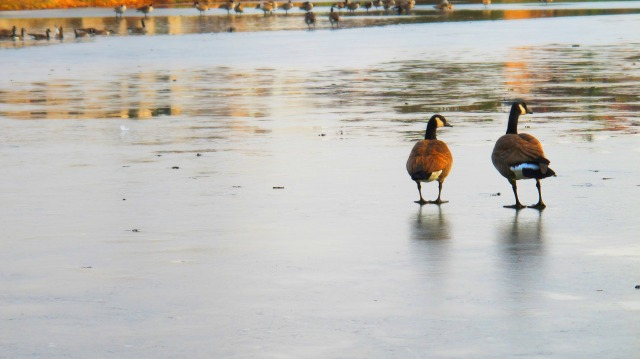 Walking on Ice