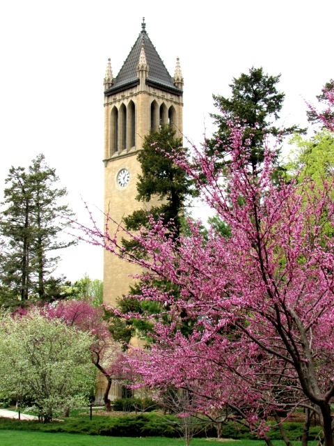 The Campanile on a Rainy Day