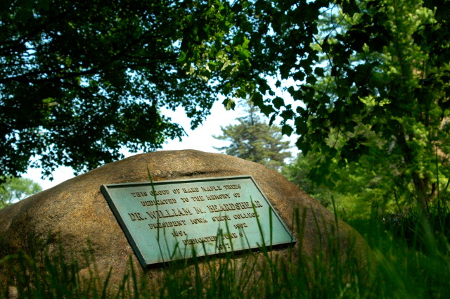 Hidden Wonder