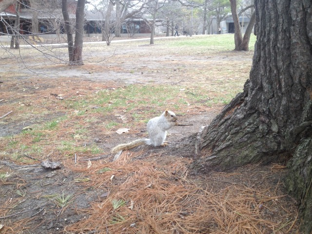 Famous ISU White Squirrel