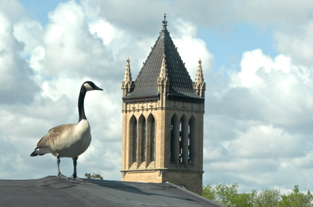 Goose's view of campus