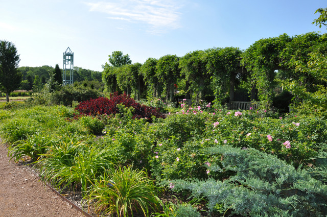 Antique Rose Garden at Reiman Gardens