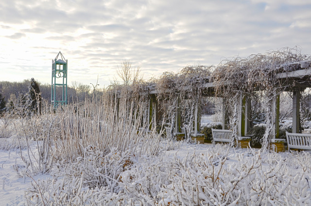 Antique Rose Garden in winter at Reiman Gardens