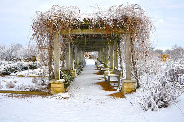 Jones Rose Garden at Reiman Gardens in the winter