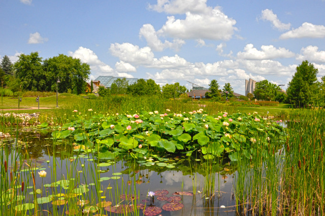 Lake Helen at Reiman Gardens in the summer
