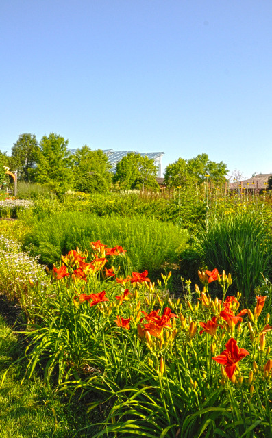 South Field at Reiman Gardens in the summer