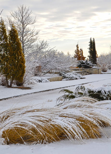 South Field at Reiman Gardens in the winter