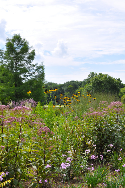 South Field at Reiman Gardens in summer