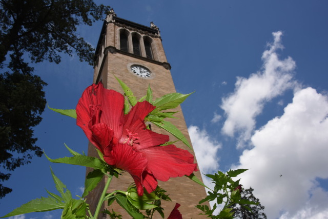 Campanile with red hibiscus