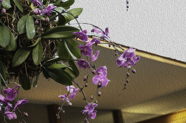 The Hanging Orchids