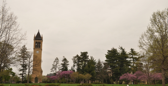 Spring at the Campanile